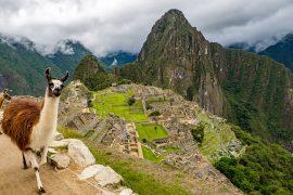 Llama at Machu Piccu